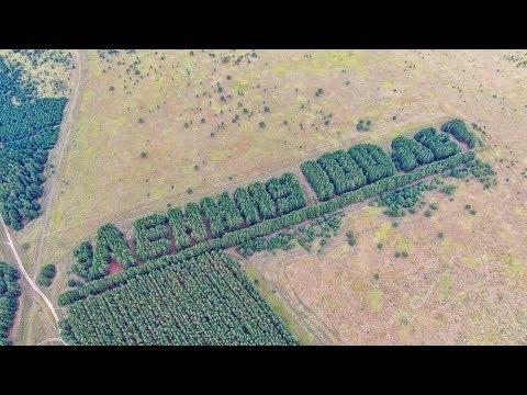 Надпись Ленину 100 лет из живых деревьев ( Курганская область)