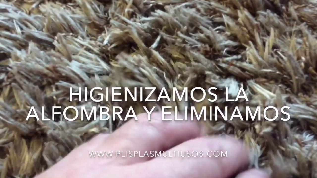 Limpiar y desinfectar alfombras de pelo largo con caca de - Limpiar alfombra pelo largo ...