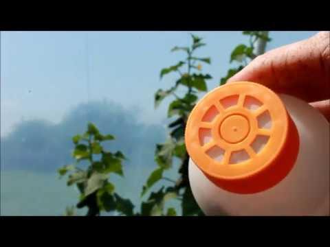 видео: Энтомофаги в теплице  против трипсы , белокрылки , паутинного клеща .