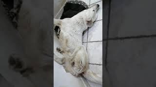 My AKBASH dog when sleep