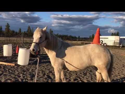 Beautiful Mustang Balances a Cone