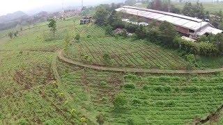 Tea Plantation Aerial view