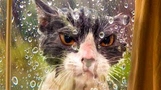 Best Funny Dogs And Cats Videos 🐶😹 - Funny Animals Compilation 😂