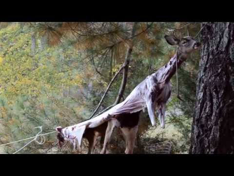 How to skin a deer with a golf ball
