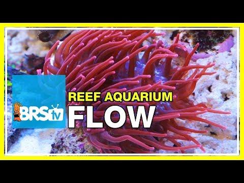 FAQ #19: How much water flow do I need in my reef aquarium?   52 FAQ