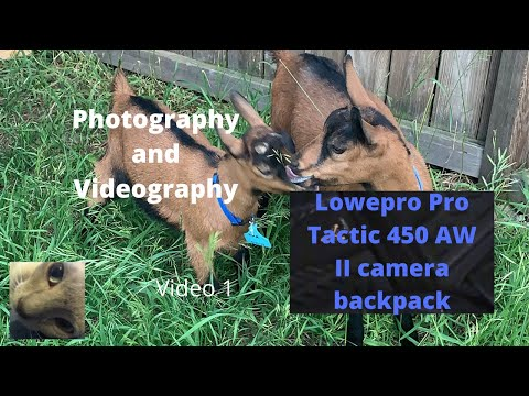 Review of the Lowepro Pro Tactic 450 AW II camera backpack