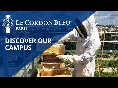 Honey harvest on the vegetable roof garden of Le Cordon Bleu Paris institute
