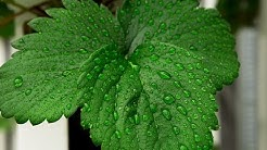 How To Control Humidity When Growing Indoors