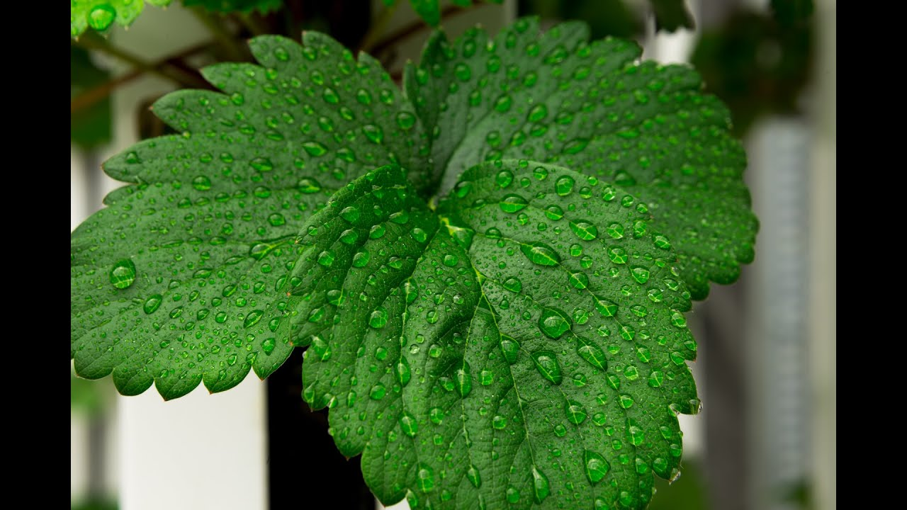 How To Control Humidity When Growing Indoors & How To Control Humidity When Growing Indoors - YouTube