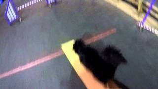 Dog Agility Training With Gopro On Headstrap
