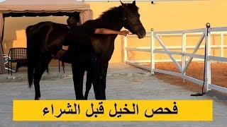 عشان ماتطيح بالغش قبل ماتشتري ! طريقة فحص الخيل ومعلومات مهمة قبل الشراء