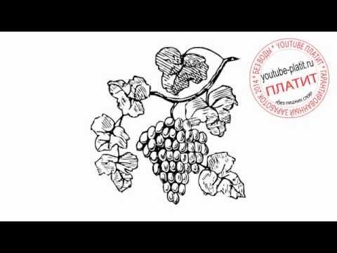Виноградная лоза нарисованная карандашом