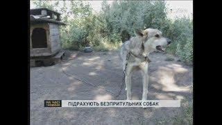 У Сумах збирають волонтерів для підрахунку безпритульних собак