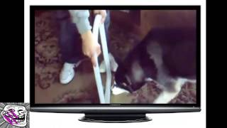 2 DOGS 1 MIRROR - funny videos