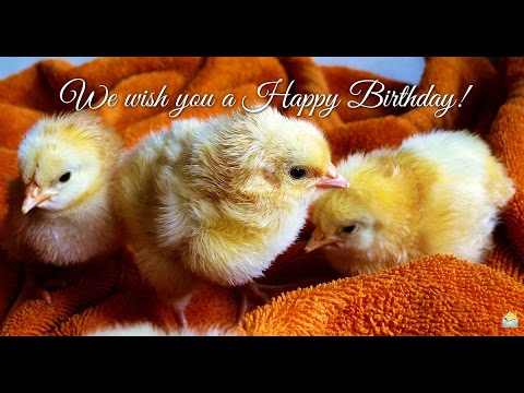 Cute Animals and Funny Birthday Wishes! - YouTube