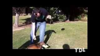 Смешное видео про собак. Есть особо смешные кадры.(, 2013-10-10T16:00:50.000Z)