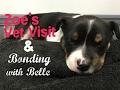 Zoe's Vet Visit & Bonding With Belle