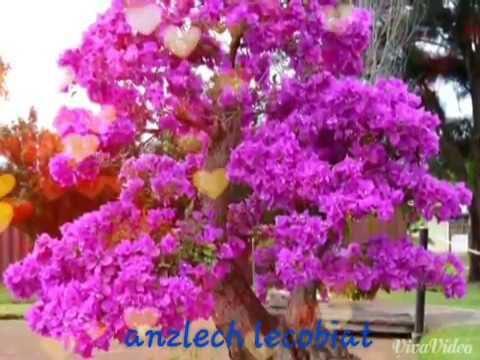 Anzlech Lenggomia - Muzik Aramaiti