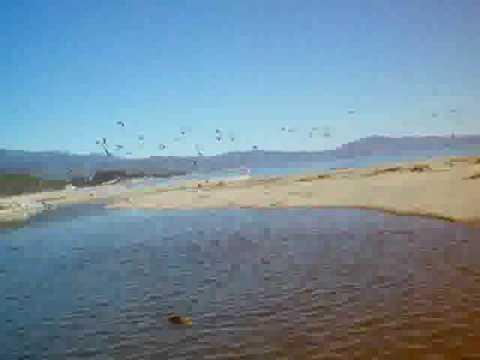 Swarm of pelicans in flight