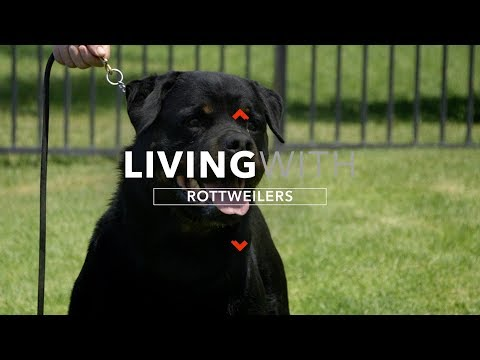 ALL ABOUT LIVING WITH ROTTWEILER DOGS