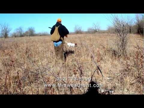 Kansas Quail Hunting