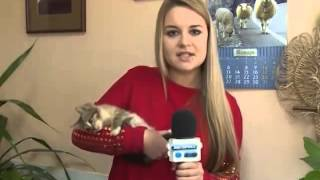 Пензенский зоопарк отдаст озорного полосатого котенка в добр