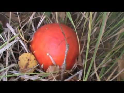 champignons de la forêt - YouTube