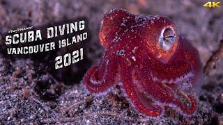 VANCOUVER ISLAND 2021 | Scuba Diving (4k)
