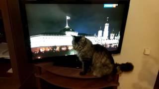 Кот и гимн России