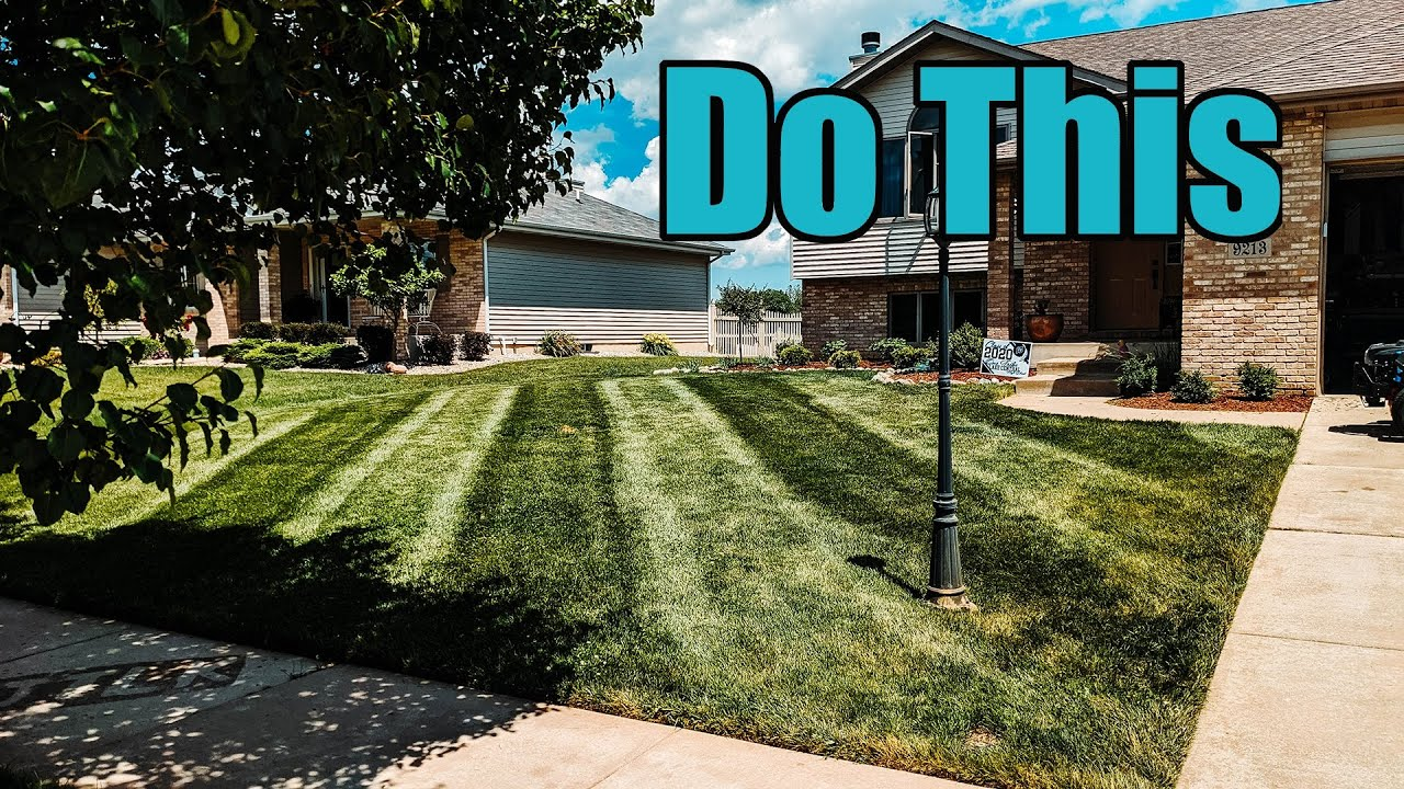 How To Prep Your Lawn for Guests // Results in 7 DAYS!!! (Double Dark Green)