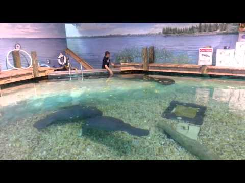 Manatee Education with Snooty!
