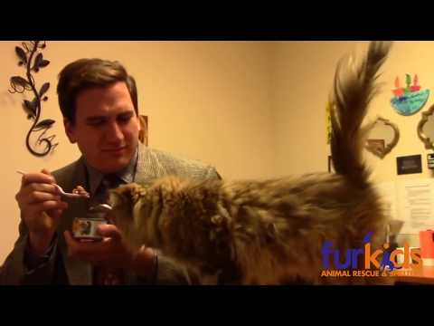 Kitten, Cat, Cats, Furry Fun, Funny!  Kitty Commercial 4 Fur-Kids