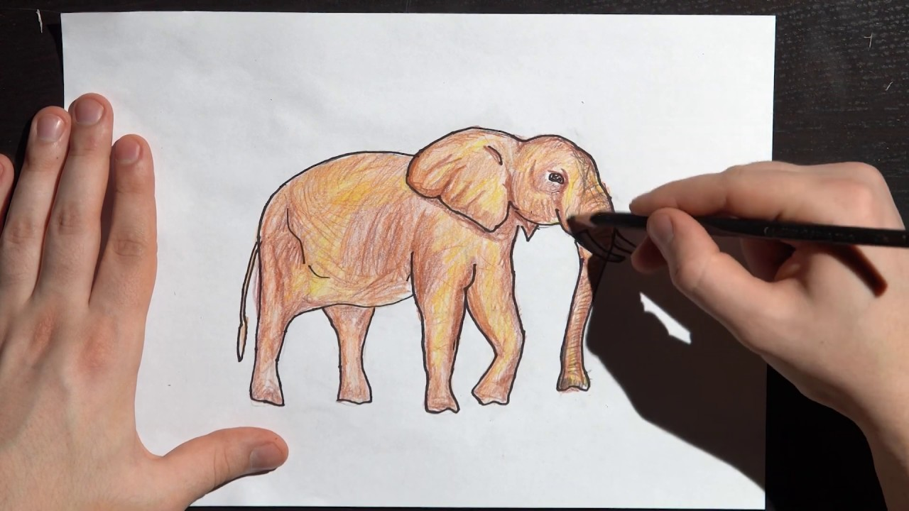 How To Draw An Elephant For Kids Draw Step By Step