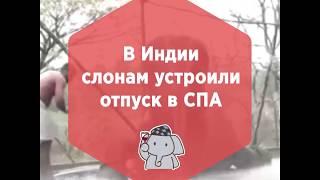 Спа для слонов ПРИКОЛ 2019 / ОЧЕнь СМЕШНО