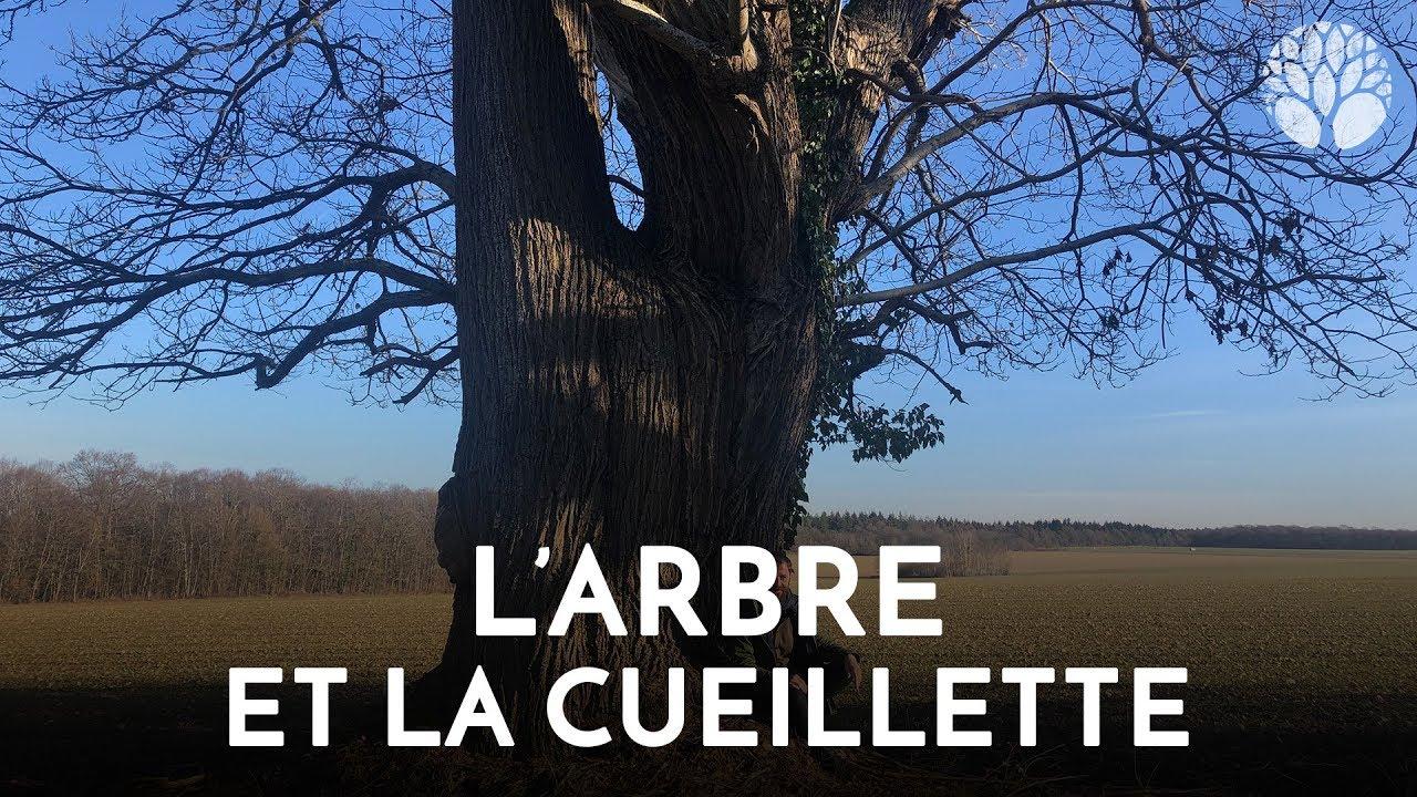 L'arbre et la cueillette