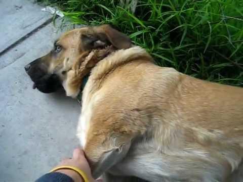 Dog's tickle spot