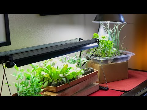 Live 3 Grow Light Mistakes To Avoid For Indoor Vegetable