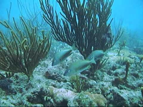 Scuba Diving Beach Dive Off Hollywood Florida