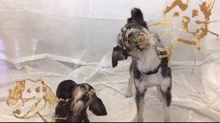 Dogs Lick Peanut Butter for National Pet Day 2017 | The Dodo
