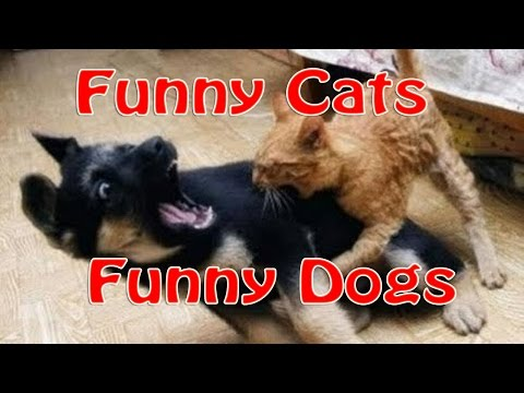 funny cats and dogs (2016) | Funny videos #1 - youtube