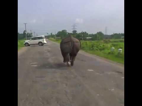 Video from kaziranga