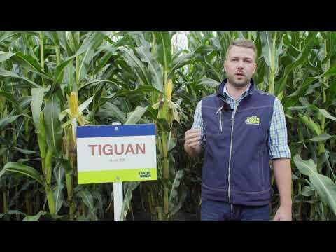 Mais TIGUAN, Vertriebsberater Florian Ruß