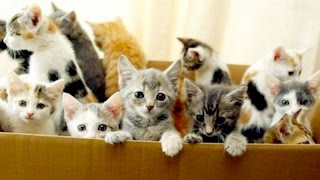 Uber DELIVERS KITTENS For National Cat Day | What's Trending Now