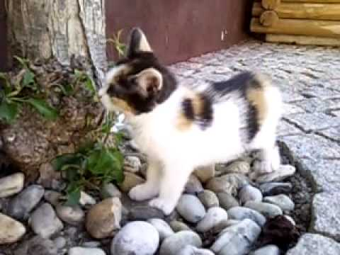 Scared cat jumps away - Slowmotion - YouTube