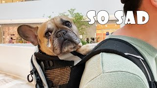 My Dogs Were Thrown Out Of This Shopping Mall | French Bulldog Tantrum