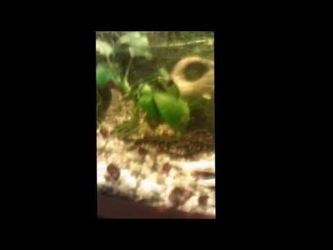 Подскажите названия аквариумных рыбок