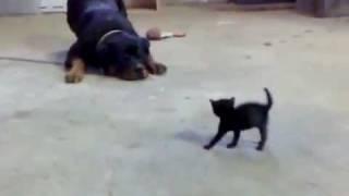 شاهد فيديو كوميدي وطريف لكلب جبان جدا خائف من قطه