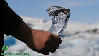 Ledová strava