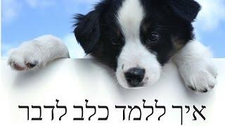 איך ללמד כלב לדבר?? - טל שלוש מאלף מומחה