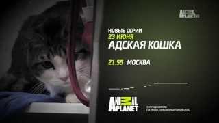 Адская Кошка. Новый сезон с 23 июня 2014